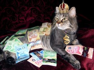 Cat with crown covered in Canadian money